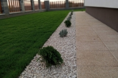 Vetett fű